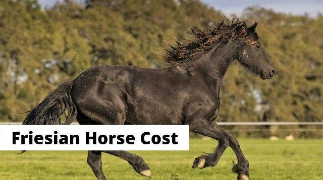 Friesian Horse Cost 3