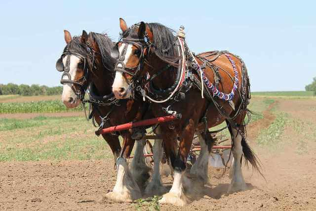History Of The Clydesdale