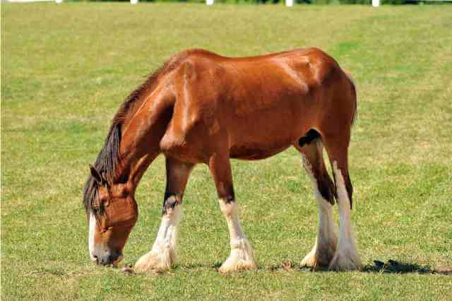 How Much Does A Clydesdale Horse Cost