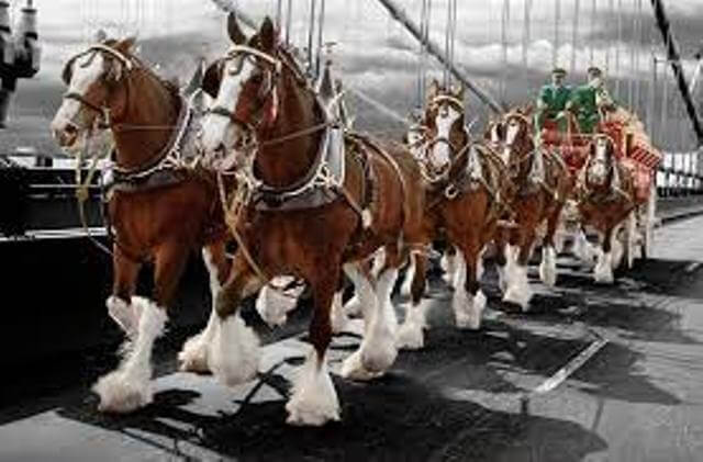 Most Expensive Clydesdale Horse