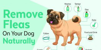 get rid of fleas on dogs naturally