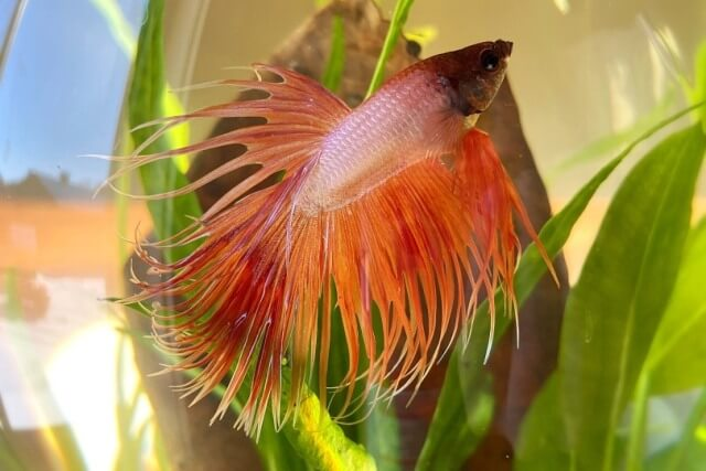 Take Care of Betta Fishes 4
