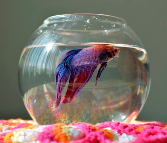 Take Care of Betta Fishes 5