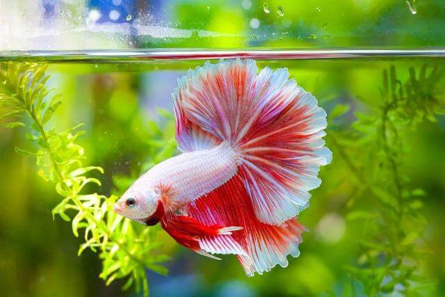 Take Care of Betta Fishes 7