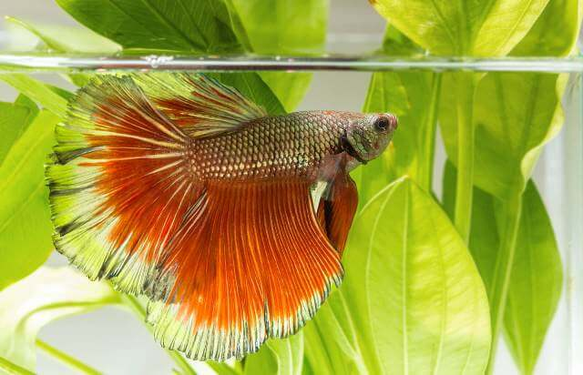 Take Care of Betta Fishes 8