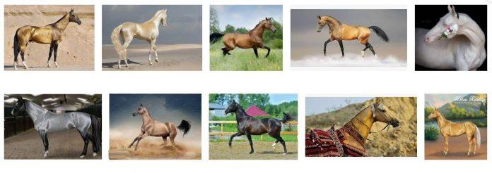 akhal-teke horse breed price
