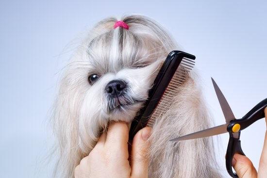 cut the hair of my dog