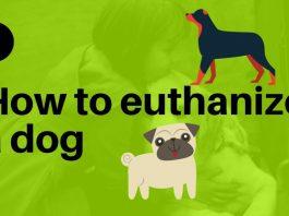 Euthanize a Dog with Benadryl 3